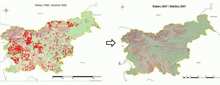 Steklina v Sloveniji med 1988 in 2007