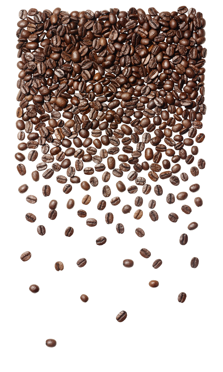 SBC-Coffee-Bean-Gradient_Lo_RGB.png