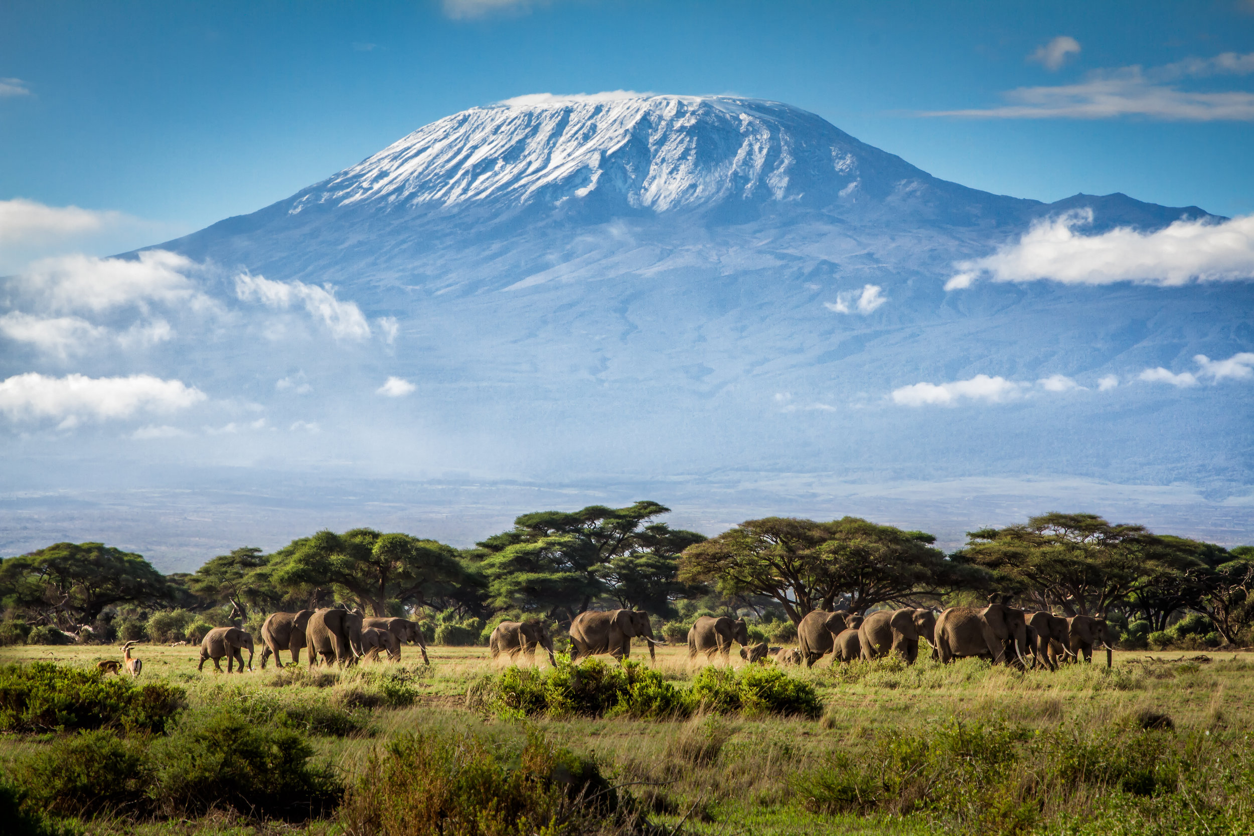 View of Mt. Kilimanjaro from Kenya with elephants in the foreground. © Ian Lenehan/500px