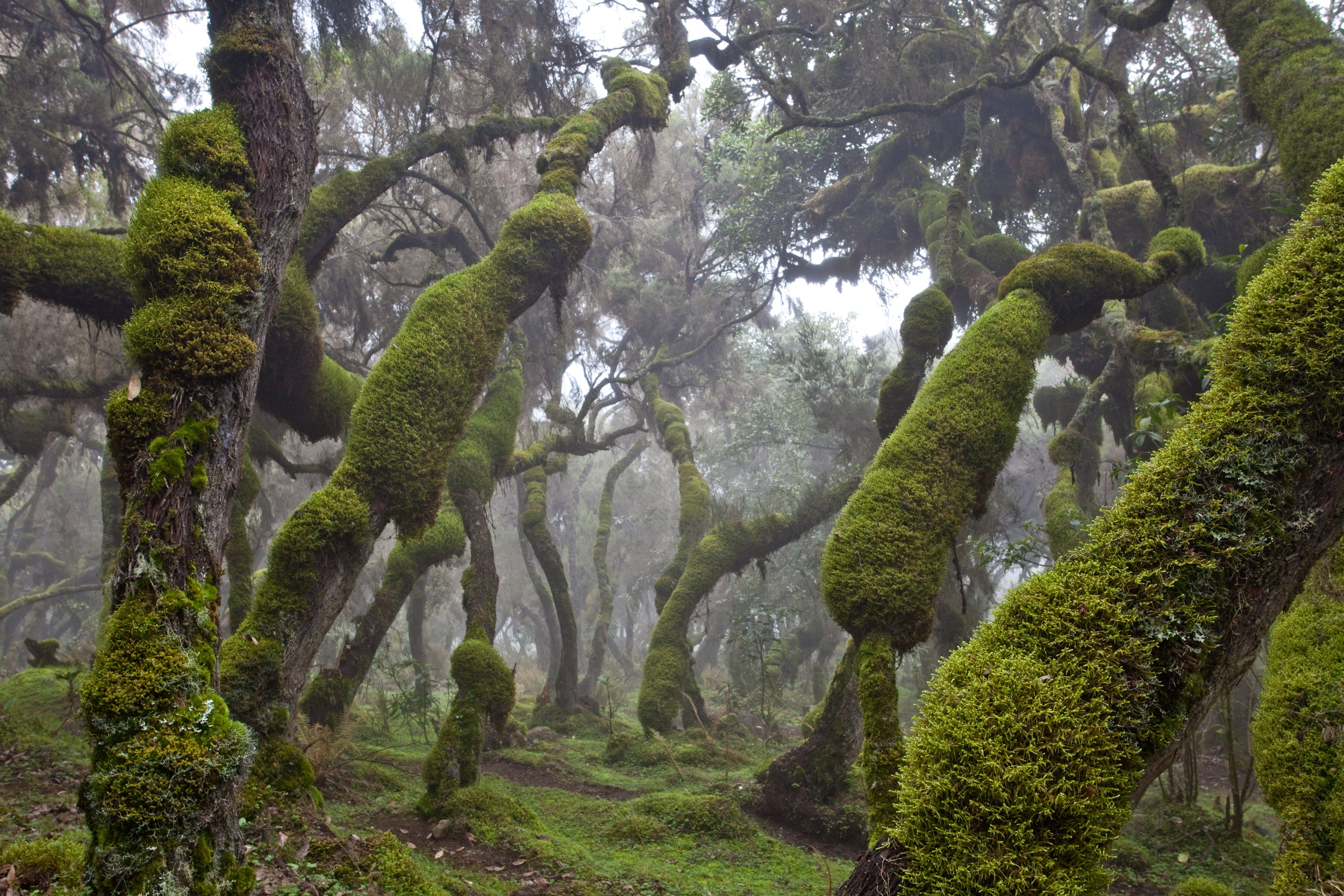 Harenna forest in Ethiopia. Photo by Robin Moore/Conservation International