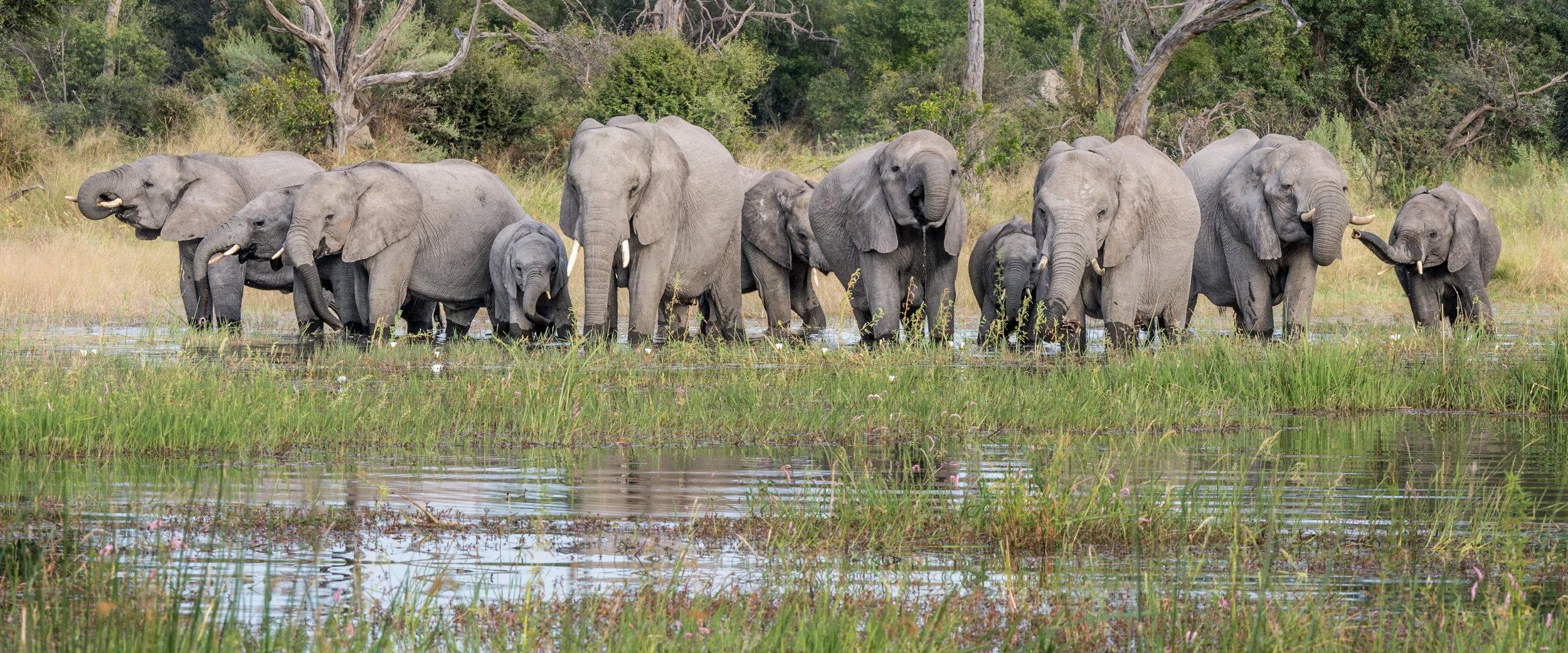 Elephants in a section of the Okavango that extends across parts of Angola, Botswana, Namibia and Zimbabwe © Jon McCormack