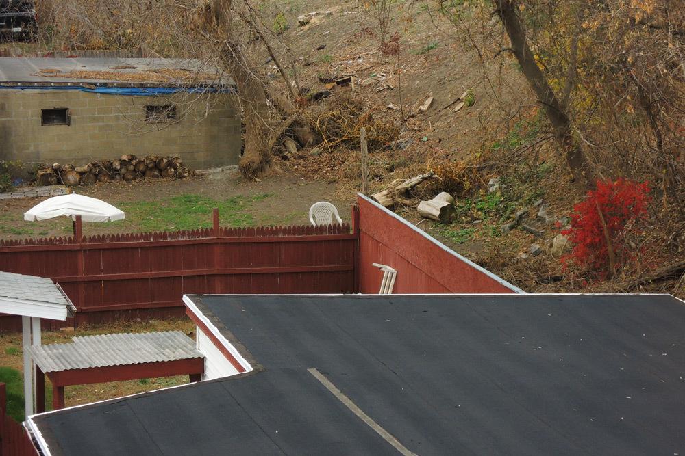 backyard_neighbor_1000.jpg