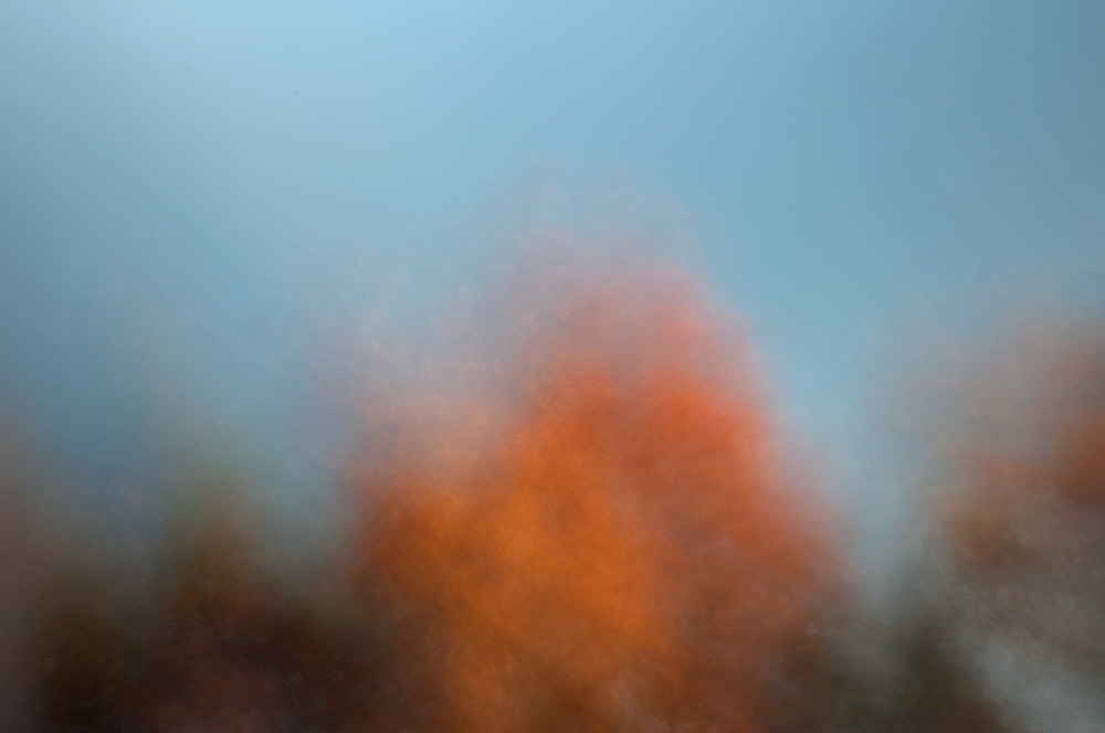 foliage_blur_07.jpg