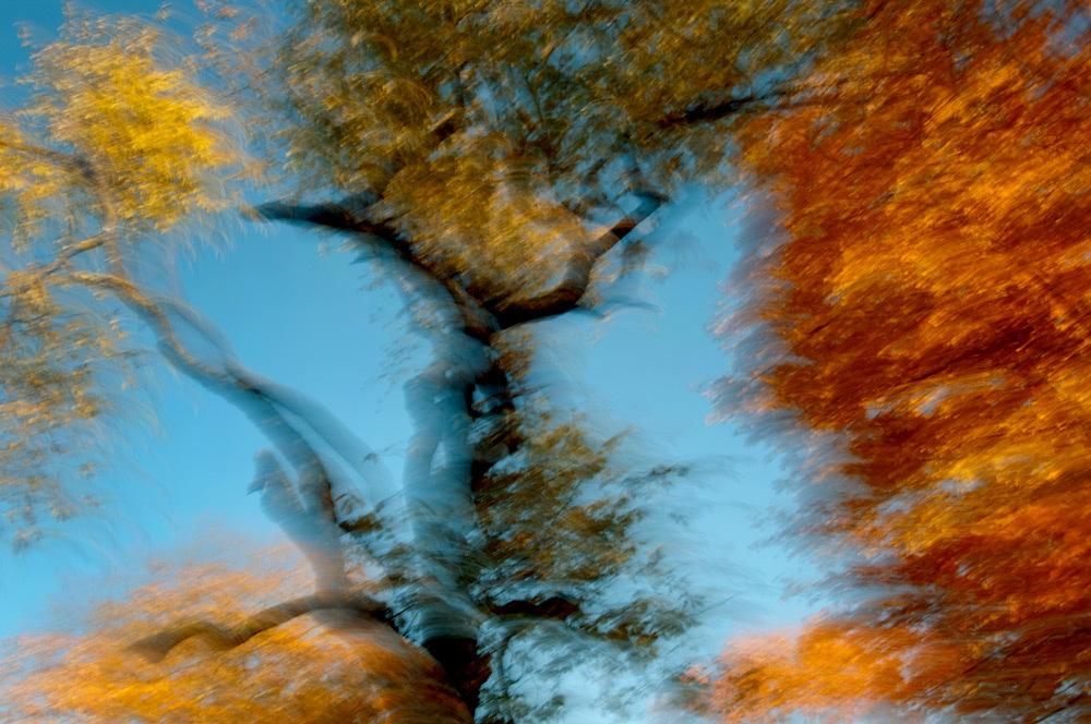 foliage_blur_06.jpg
