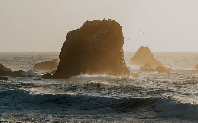 On our way to Big Sur, California we came across this incredible view at sunset.  This scene of a surfer timing the waves is the epitome of what I expected from a California coastal road trip. • • • • • #westcoast #moodygrams #travelphotography #goldenhour #justgoshoot #thevisualscollective #awesupply #vscocam #fullframe #theIMAGED #artofvisuals #exklusive_shot #agameoftones #visualsoflife #ReflectionGram #feedbacknation #neverstopexploring #surfphotography #eastcoastcreatives #thevisualscollective #awesupply #fog #bevisuallyinspired #bigsur #perfecttiming #weddingphotography #eclectic_shotz #folkgreen #earthfocus