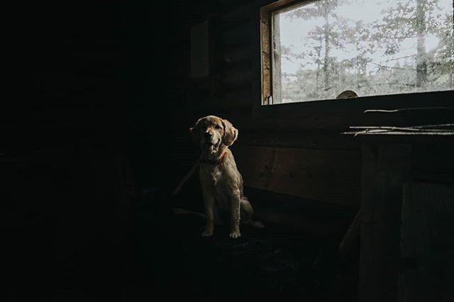 Rikku - Our puppy, posing at the Cabin. 🐶🌲 • • • • • #goldenretriever #naturephoto #babyanimals #puppy #animallove #animal_captures #animals_in_world #animalelite #natgeowild_hd #natgeopix #wildlifeonearth #animal_sultans #animalportrait #dogphotography #wildlifephotographer #exploretheglobe #agameofportraits #jaw_dropping_shotz #natgeo #natgeohub @natgeo @natgeoyourshot #natgeoyourshot #moodyports #awesupply #thevisualscollective #eastcoastcreatives #ANE #atlanticnortheast #discovercharlottetown #tourismPEI #folkgreen @folkgreen