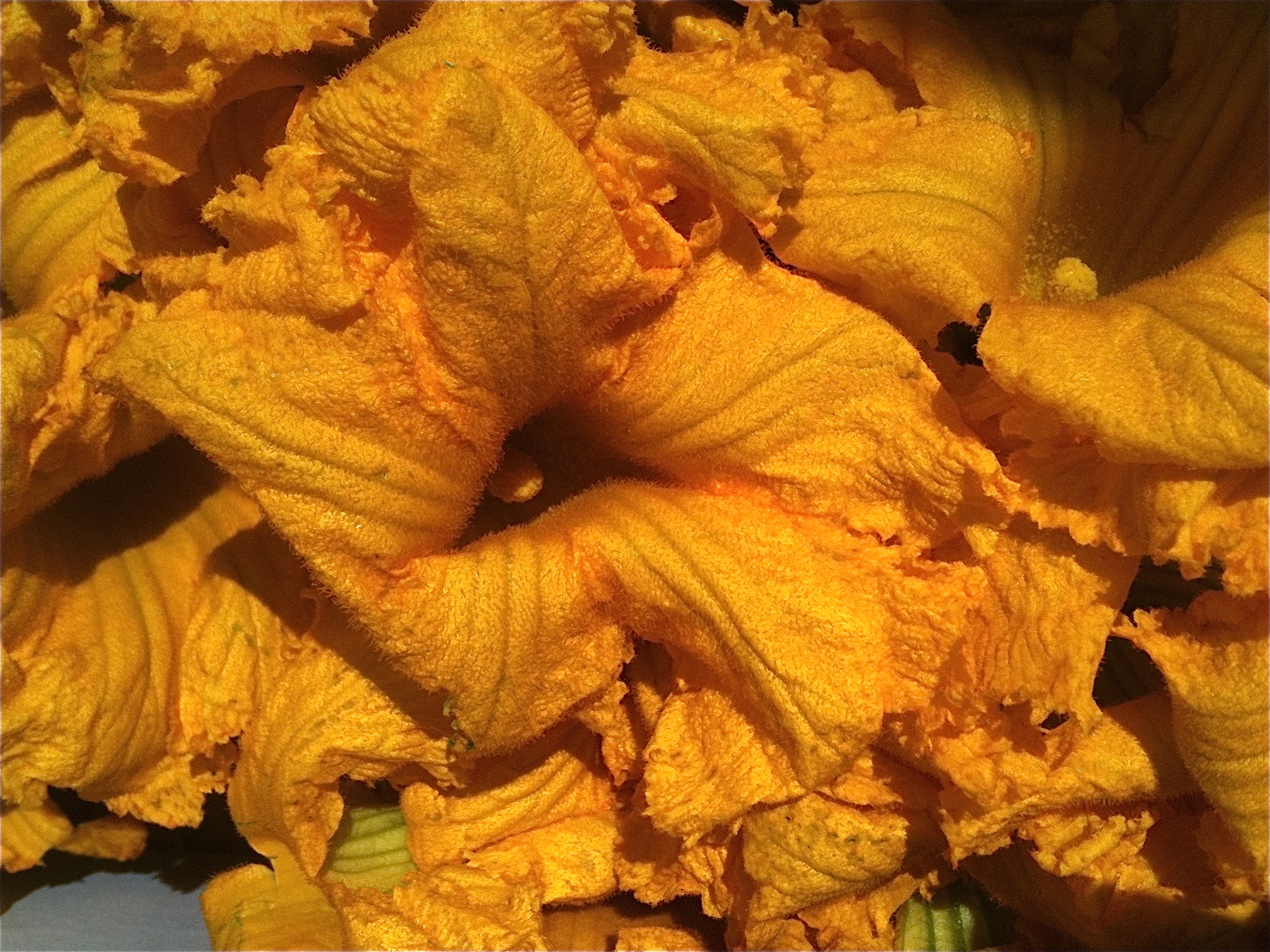 The most colorful and vibrant squash blossoms...