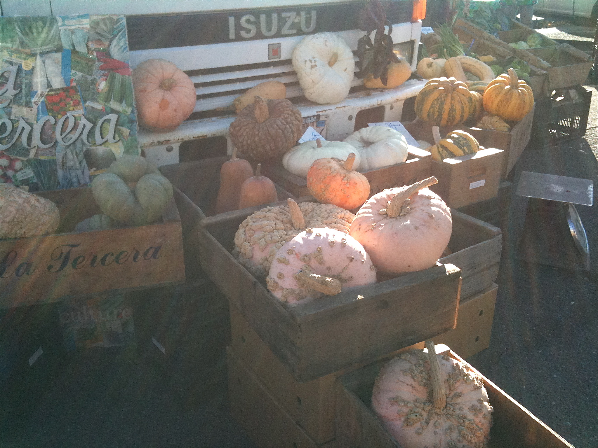Our new market friends have the most amazing offering of Fall squash varieties!