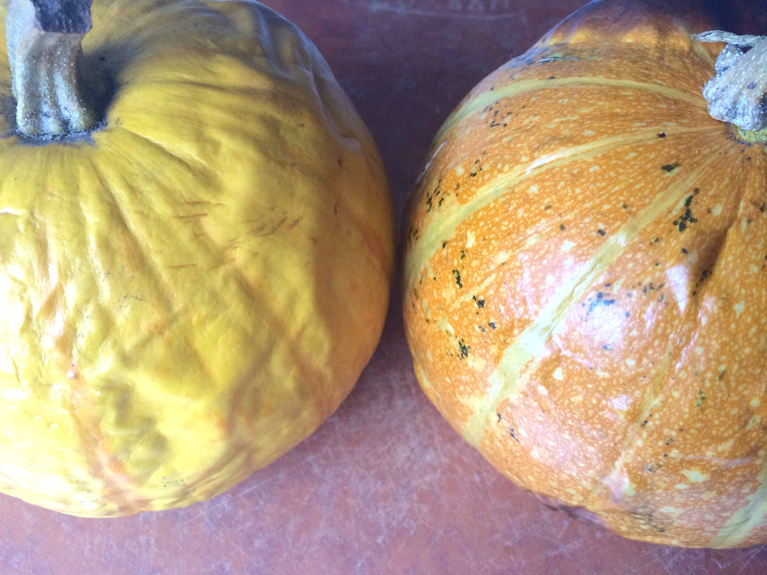 Pie pumpkins from the market, fresh out of the oven after roasting (these from  Lonely Mountain Farm ).