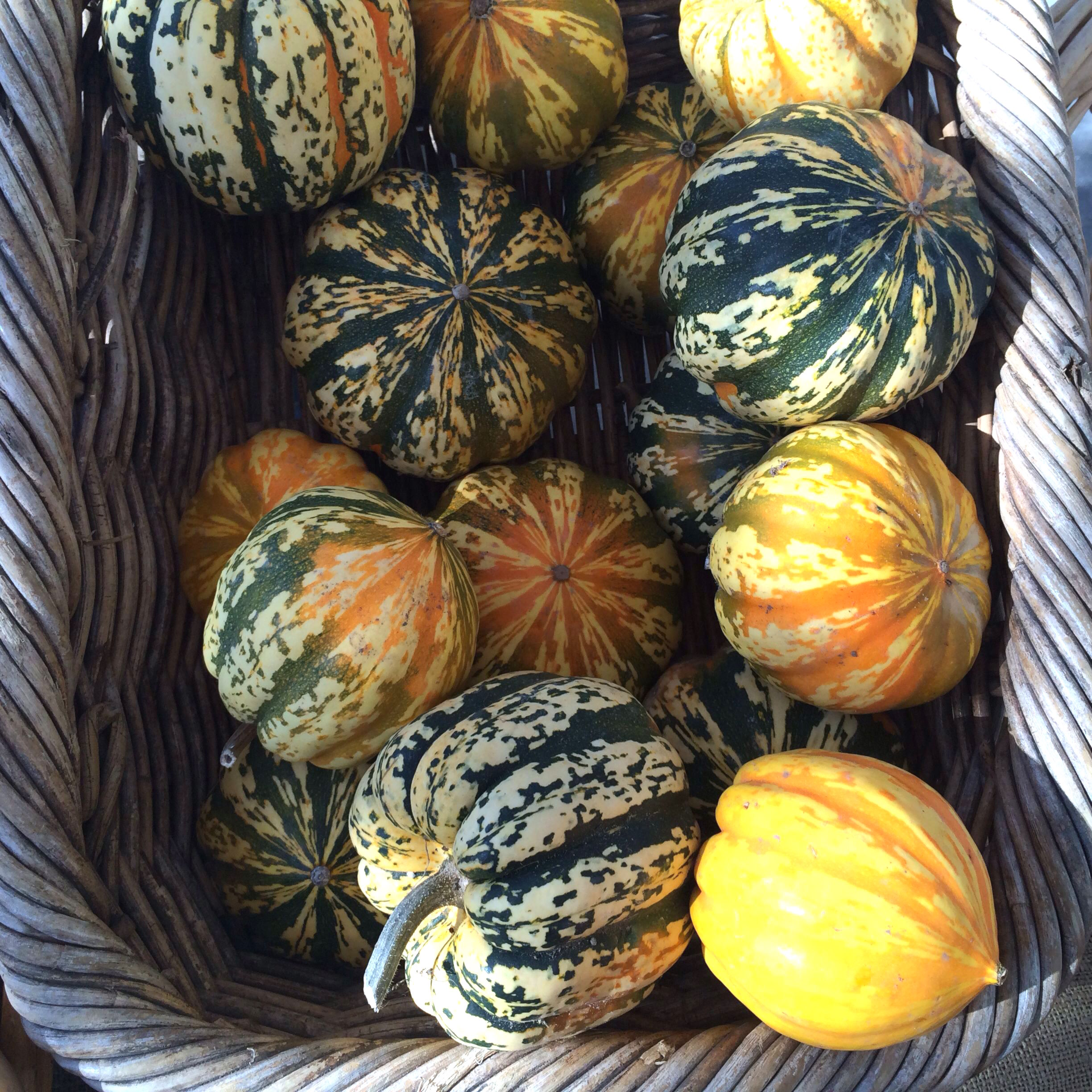 Carnival acorn squashes from Lonely Mountain Farm (at CUESA, SF)