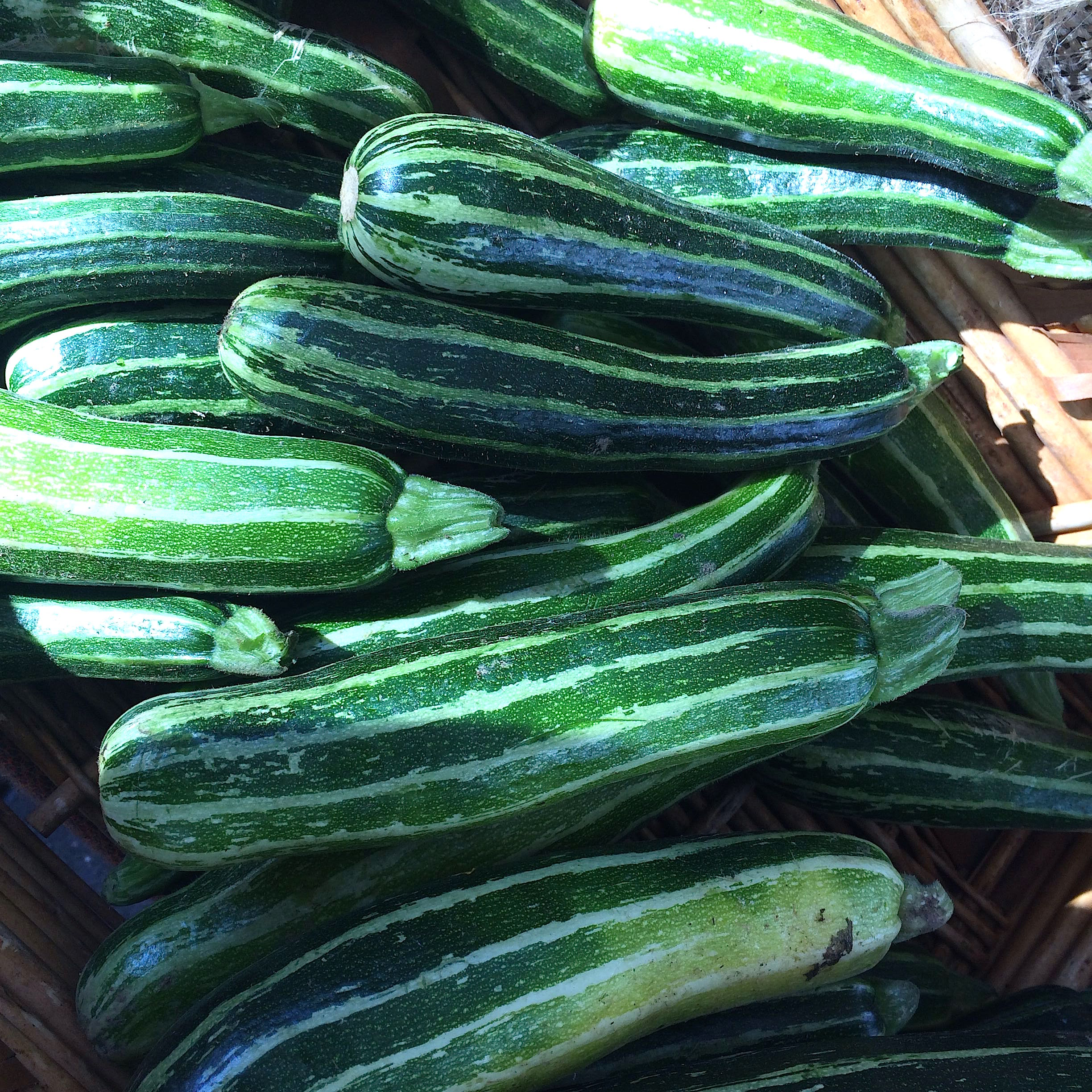 Tiger squashes from Lonely Mountain at CUESA.