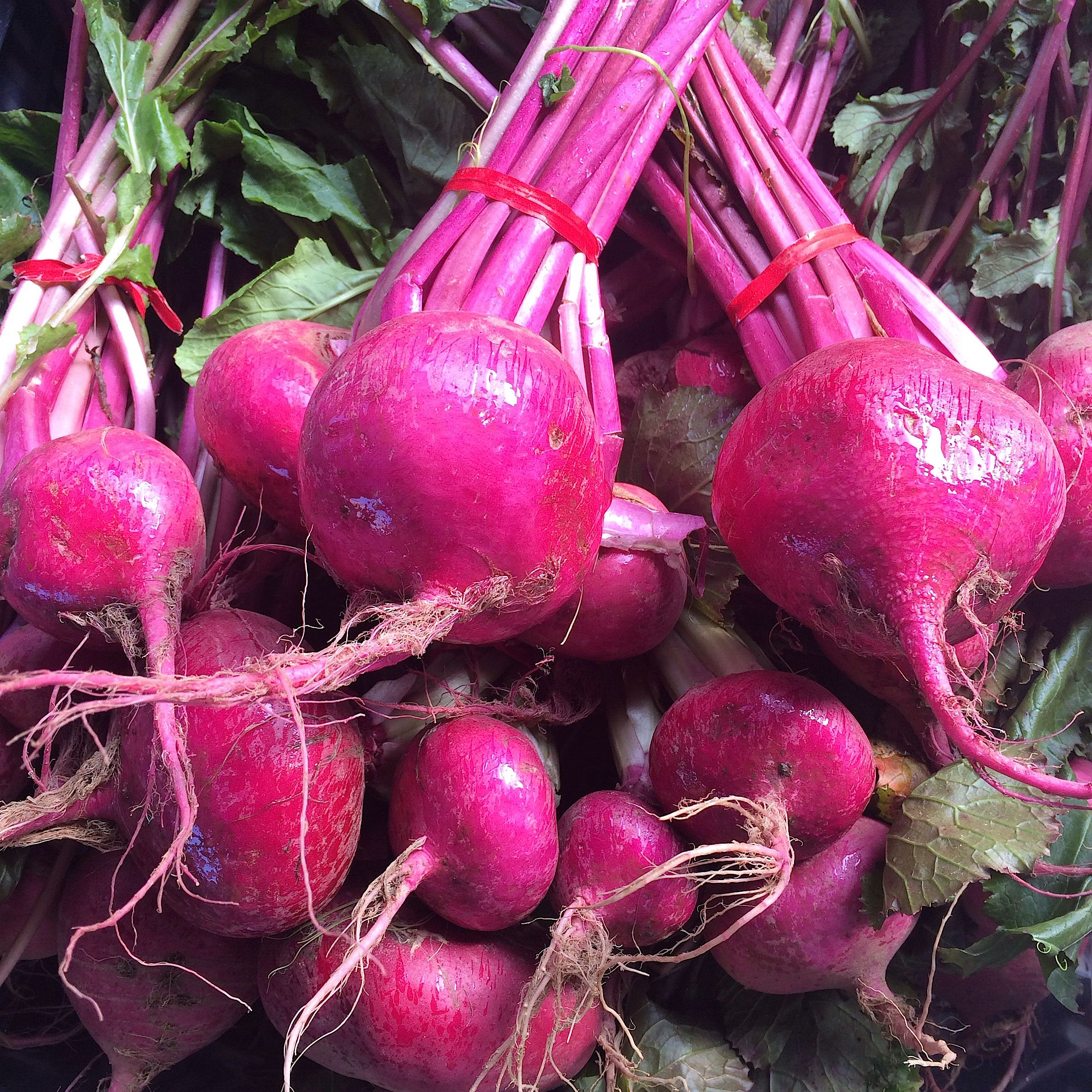 Scarlett turnips found at the SF Ferry Building Farmers Market run by CUESA (at Marin Roots Organic)