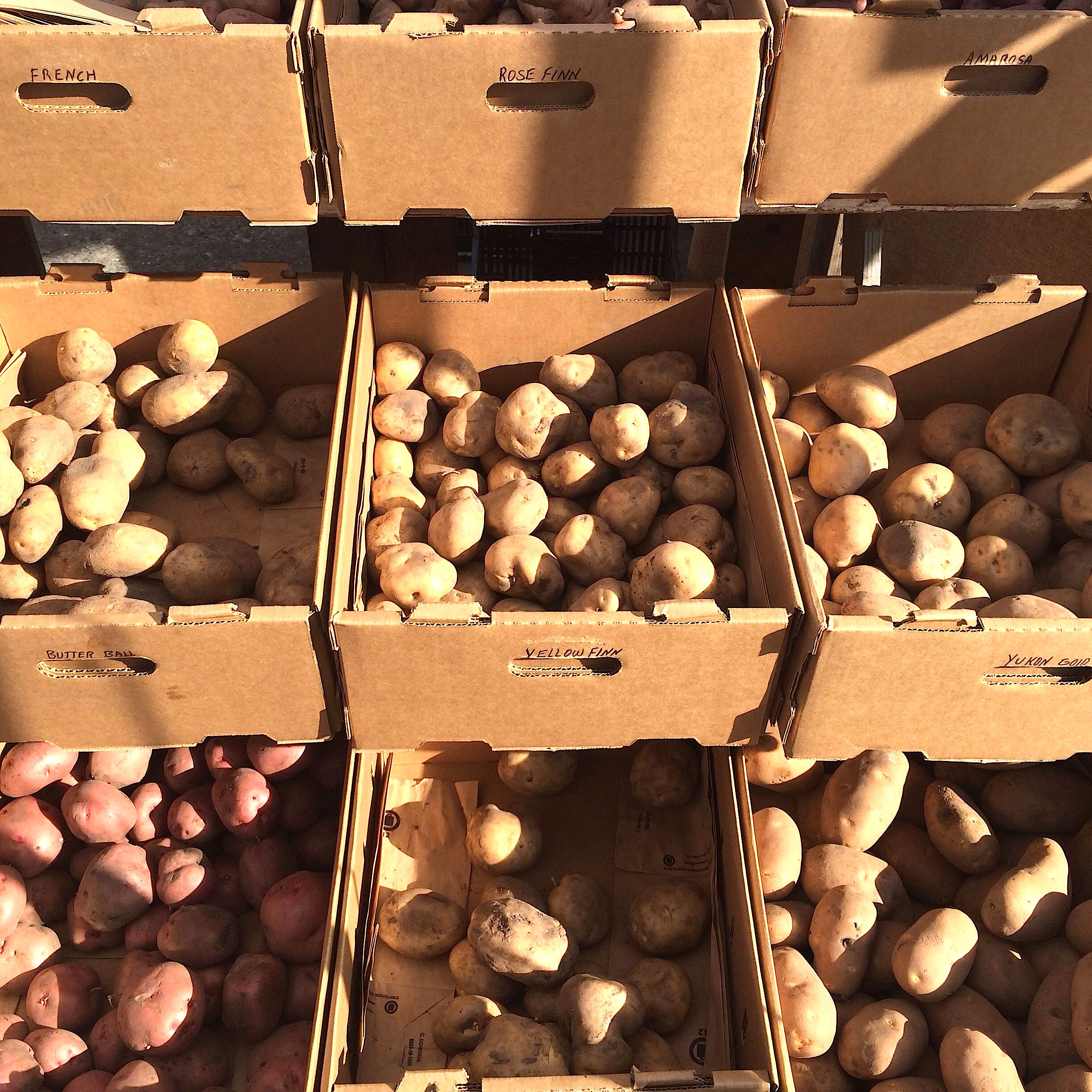 Potatoes at the San Francisco Ferry Building Farmers Market (Little Organic Farm)
