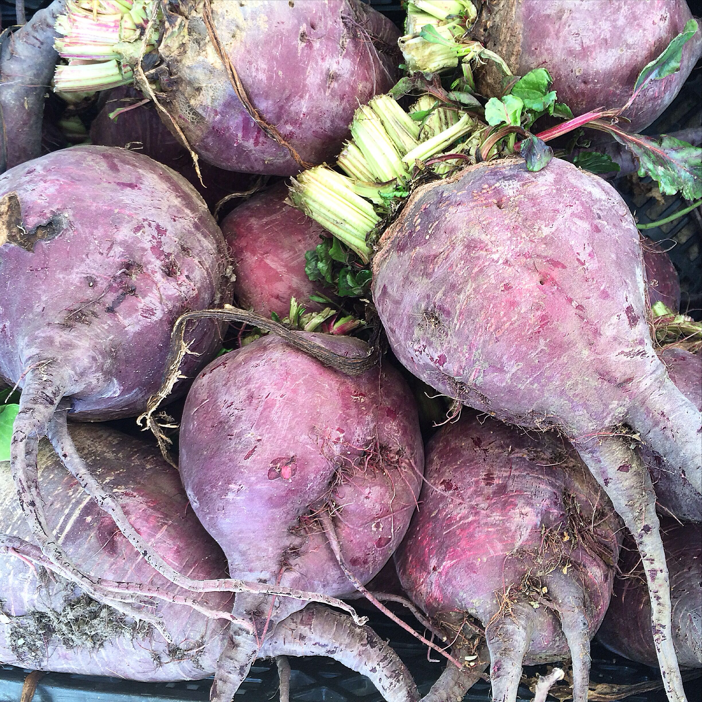 Lutz beets from Tierra Vegetable Farm at the CUESA Farmers Market in San Francisco.