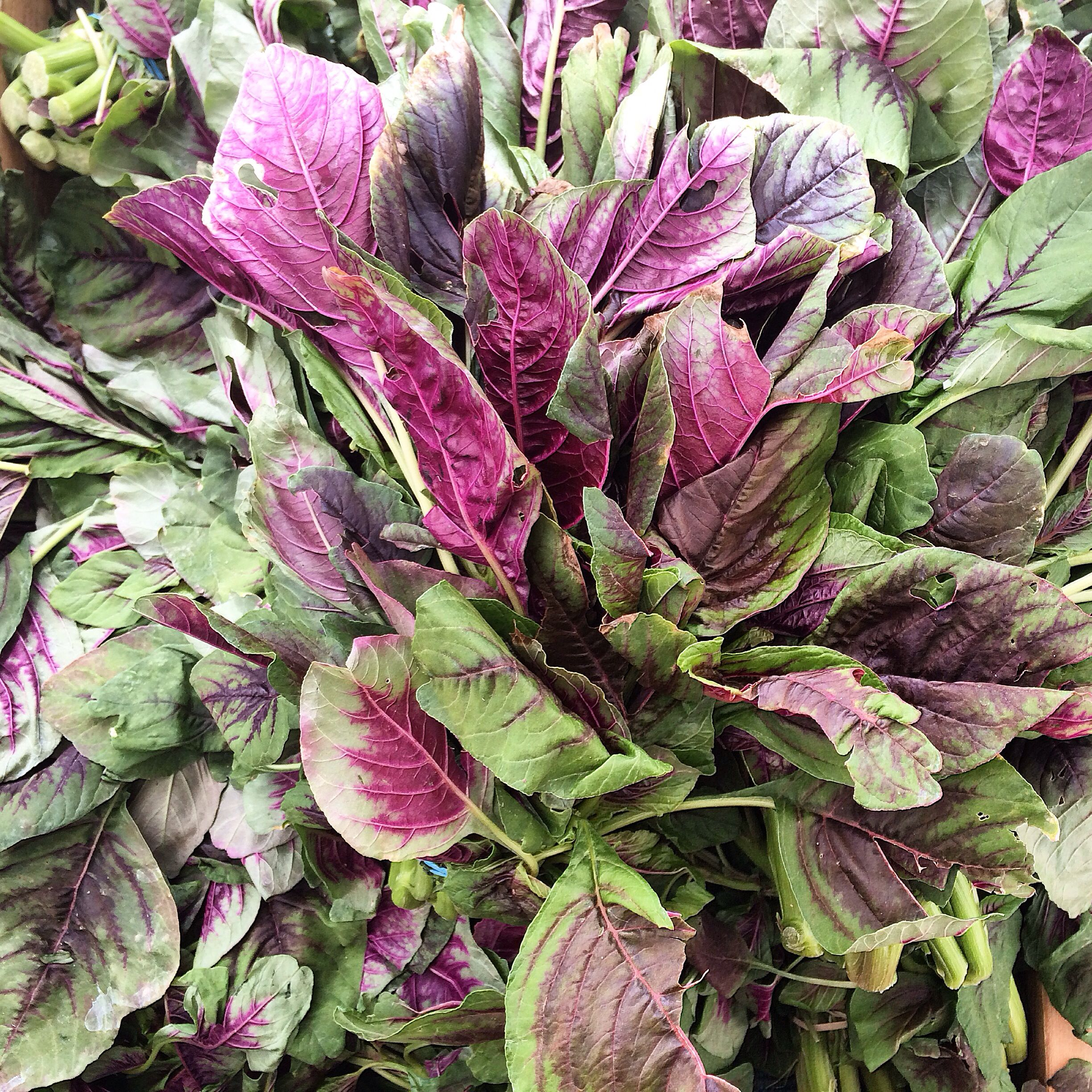 Beautiful amaranth greens from Vong Family Farm at the Berkeley Farmers Market.