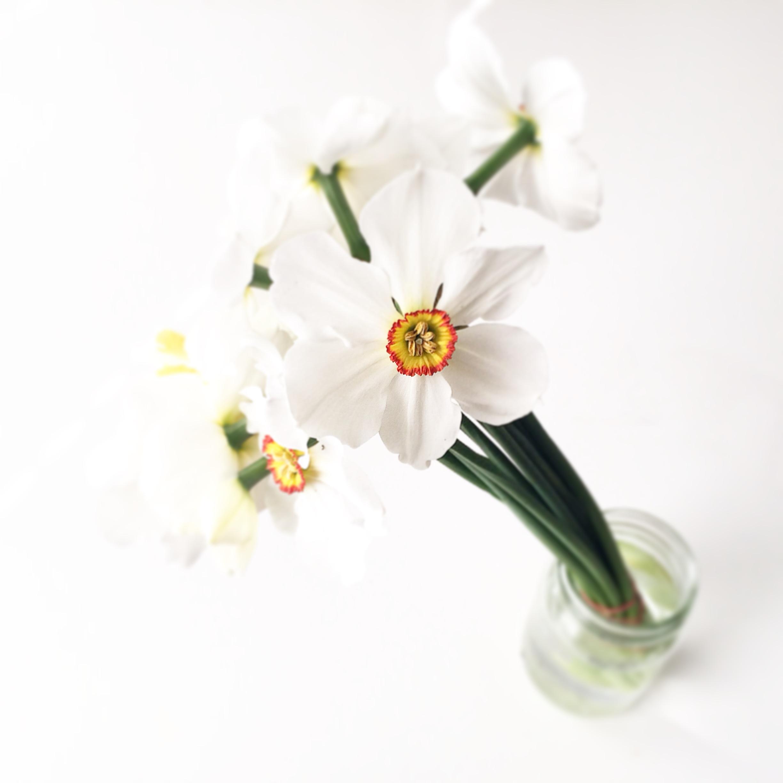 First Daffodils! - Berkeley Farmers Market, Thomas Organic.