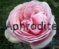 thumb_120x100_Aphrodite.jpg