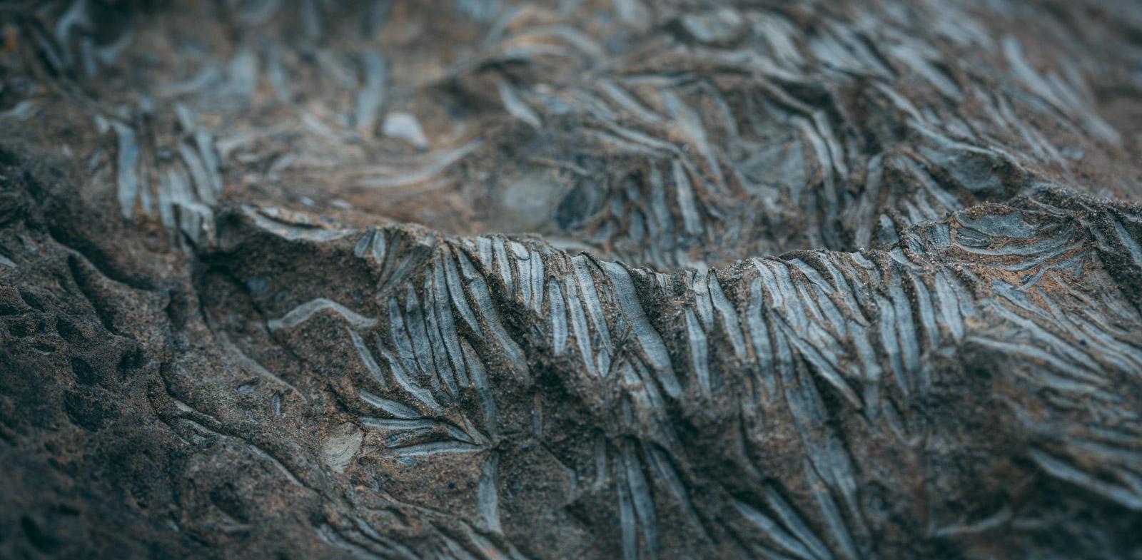 Versteinerungen in einem Felsbrocken