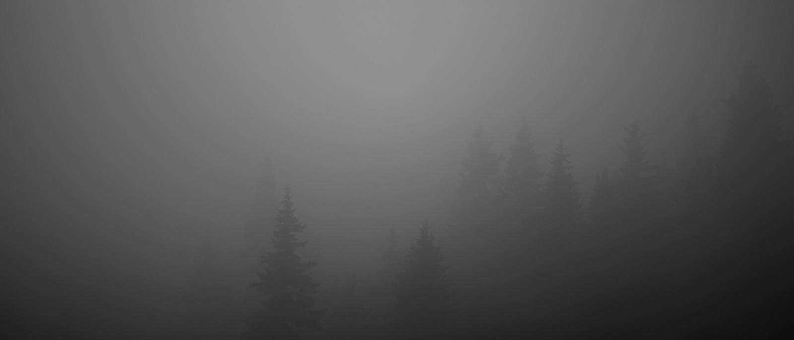 Baumgipfel im Nebel.jpg