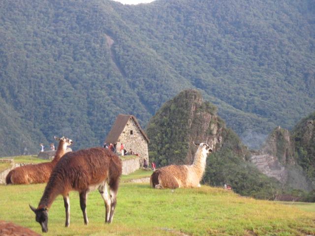 Relaxed Lamas