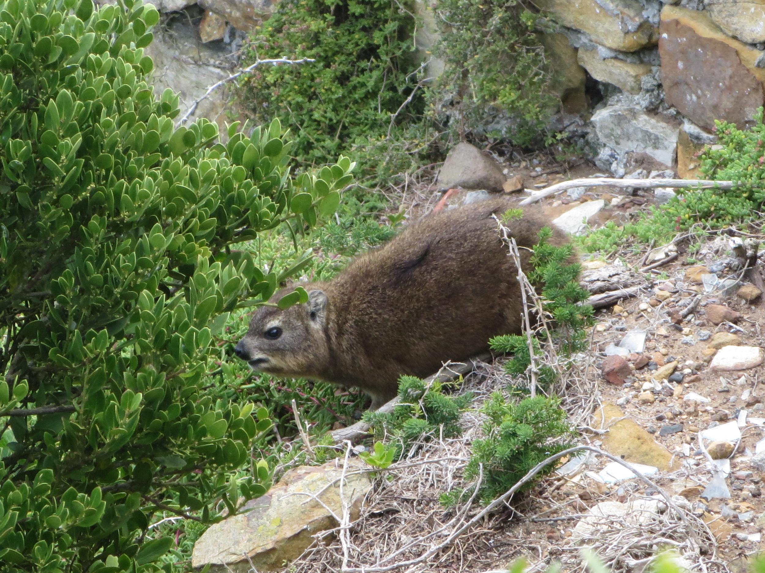 Some strange animal that Kristinn spotted
