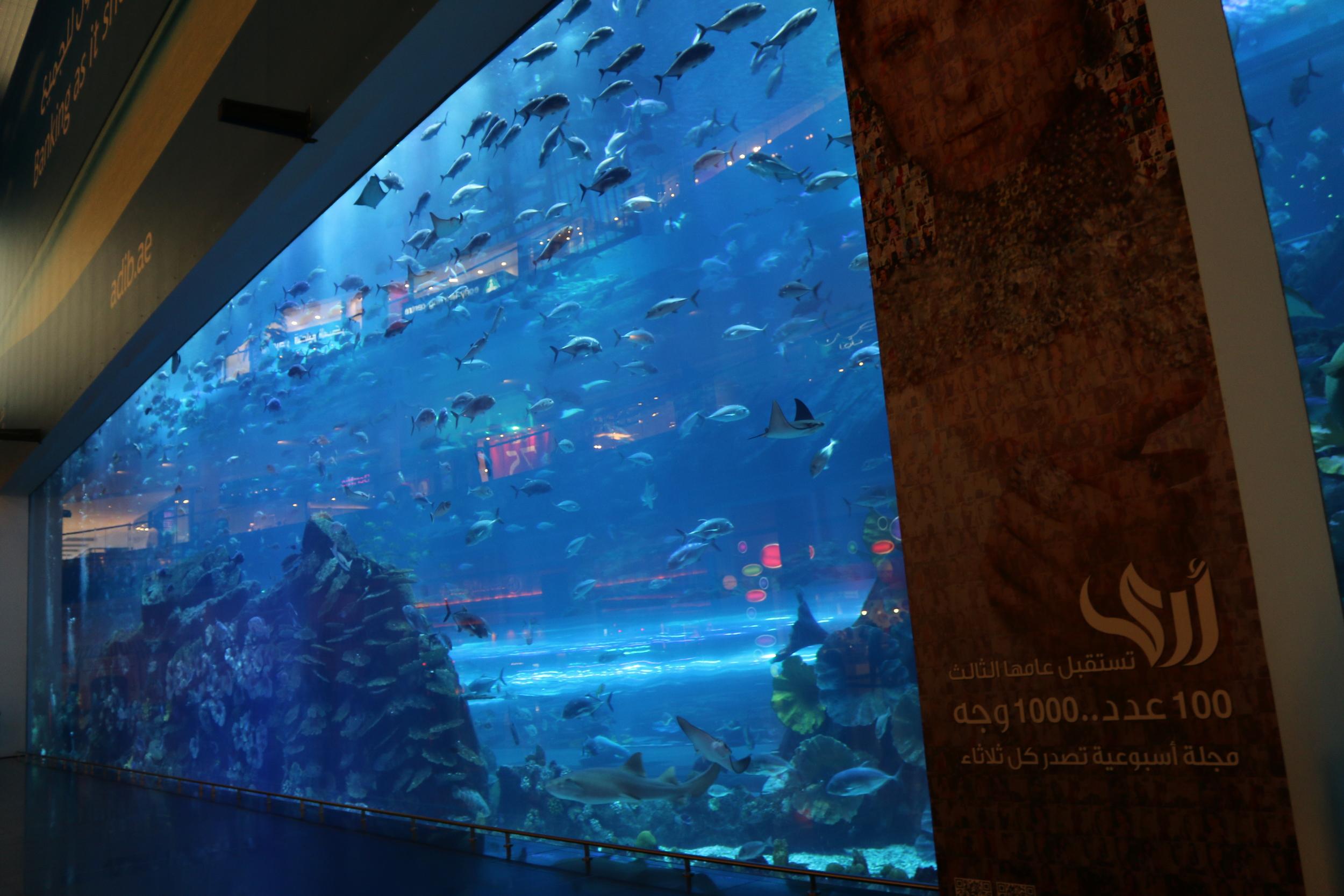 The biggest aquarium in the world