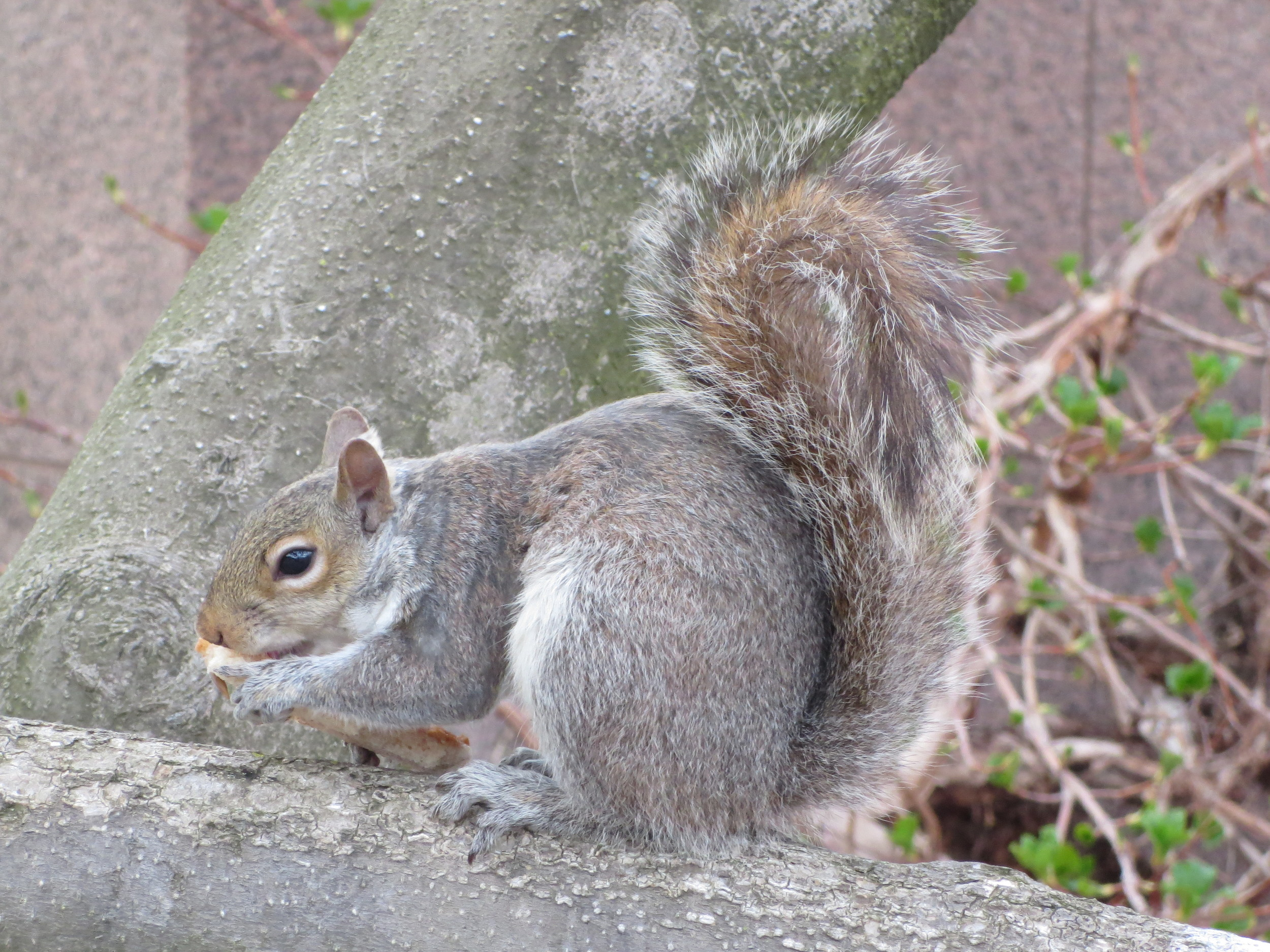 One of Dora´s many photos of a squirrel