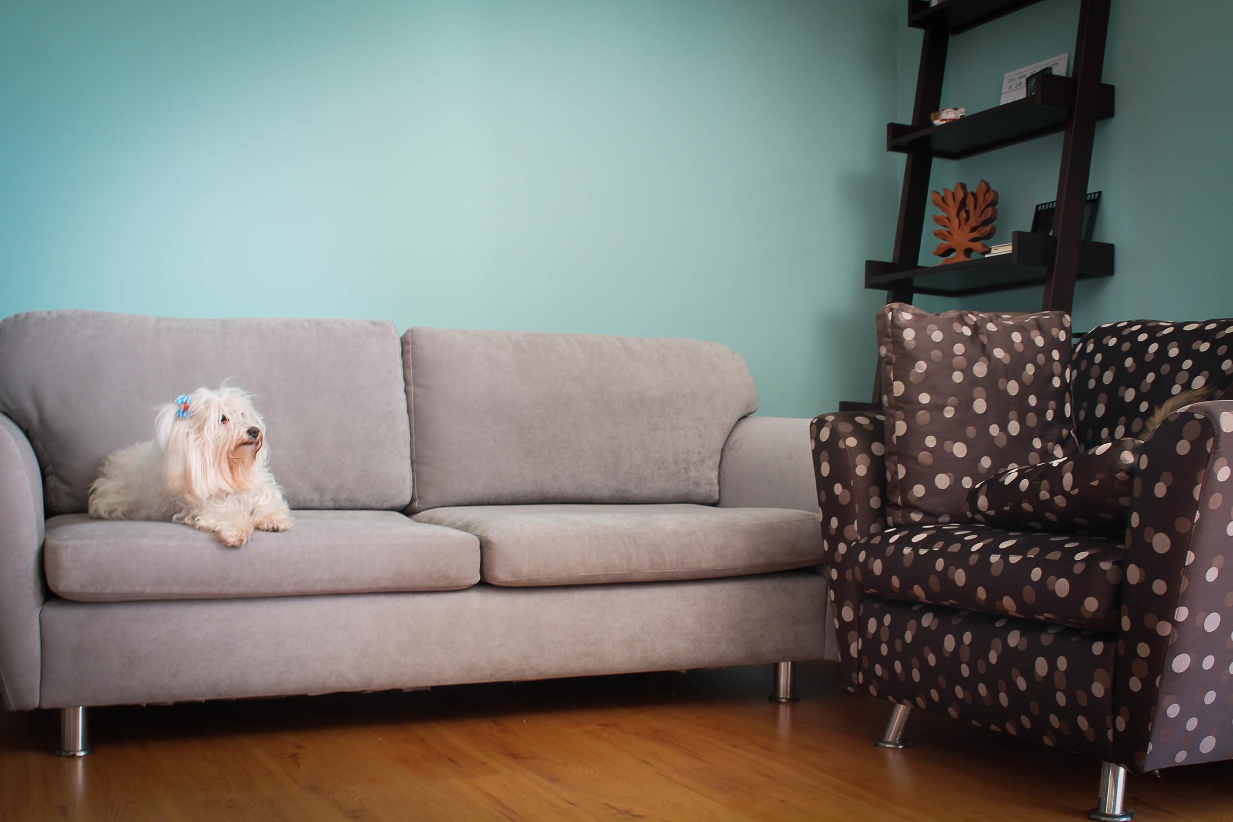 Parede da sala com pintura azul e móveis aproveitados do antigo apartamento.