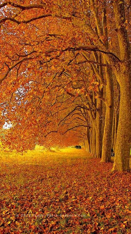 297-autumn-in-lausanne-5a6b6017-sz421x750-animate.jpg
