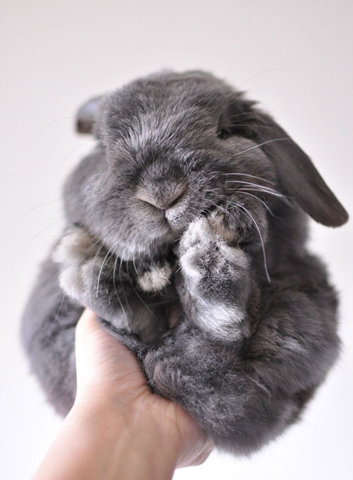 98-rabbit-13-a8c1f8d1-sz500x680-animate.jpg