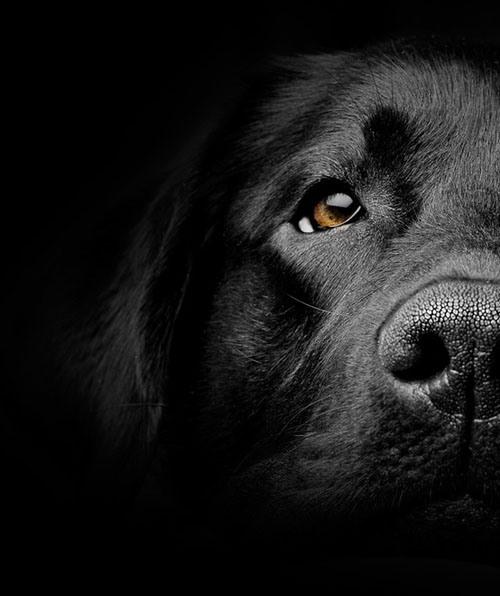 142-dog-21-cdb35693-sz554x660-animate.jpg