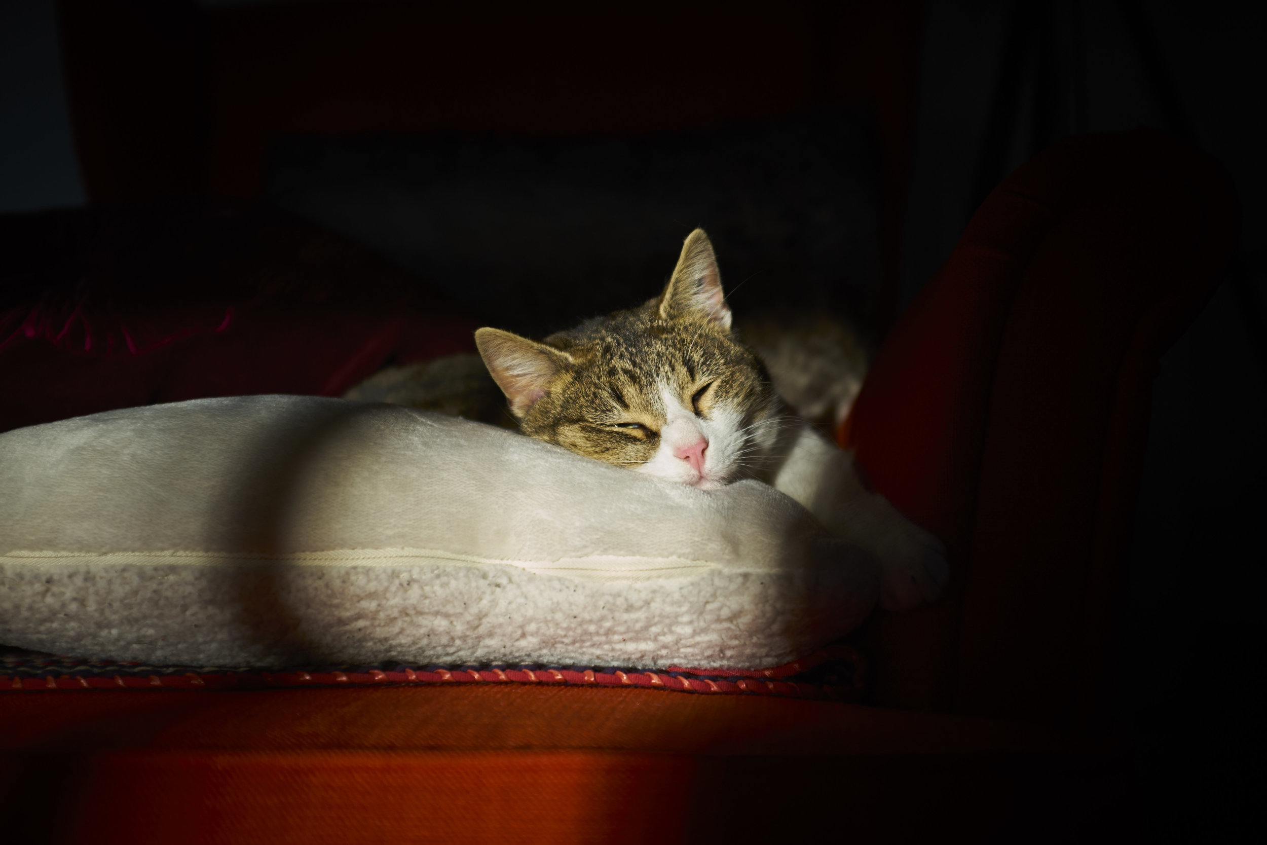 Tranquille ! - Fuji X100S - Capture One 10