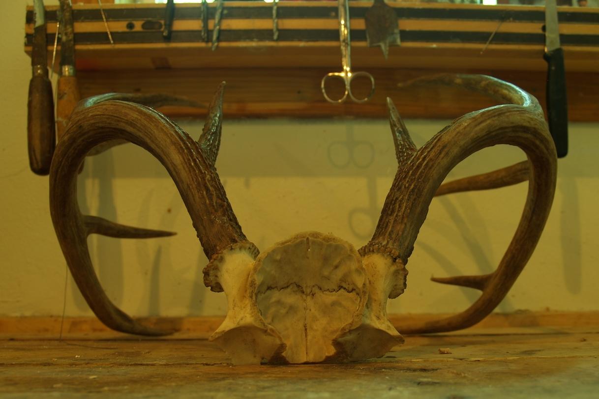 Horn Mount - Cut Skull Cap