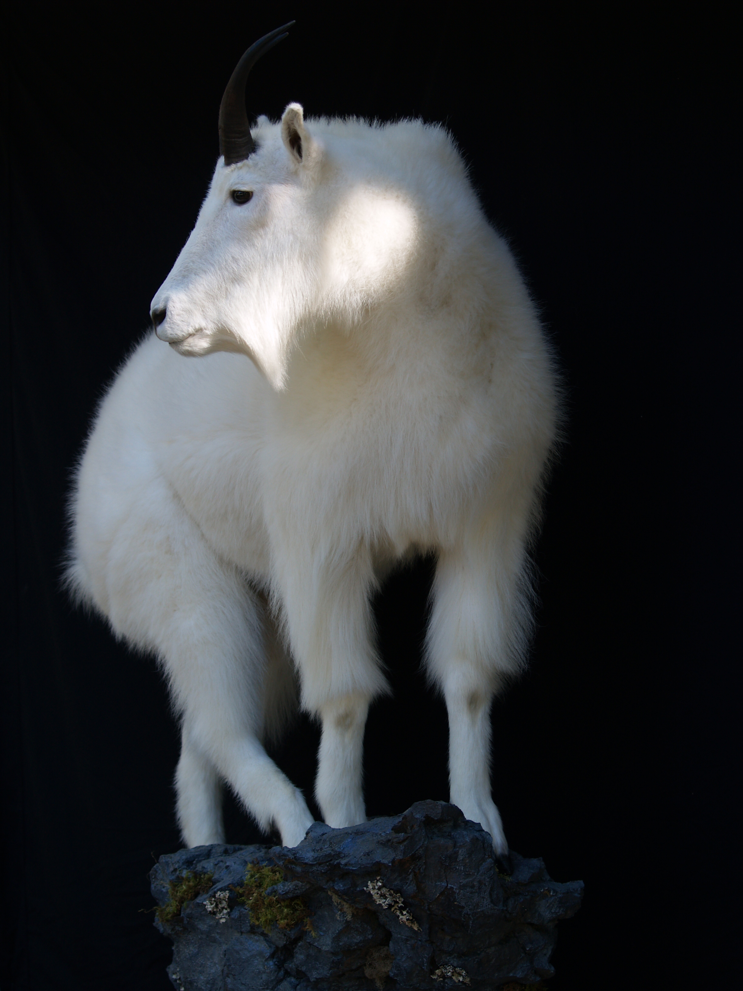 Taxidermy 2015 028.JPG