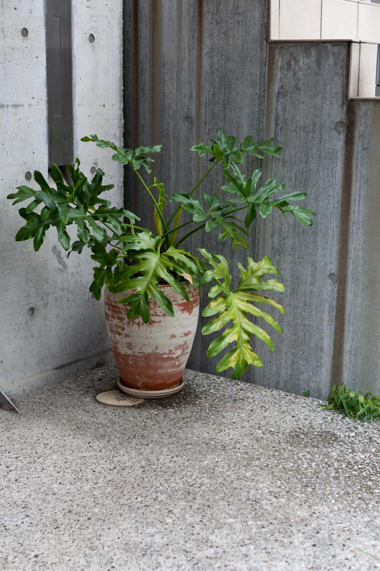 tokyo-4986.jpg