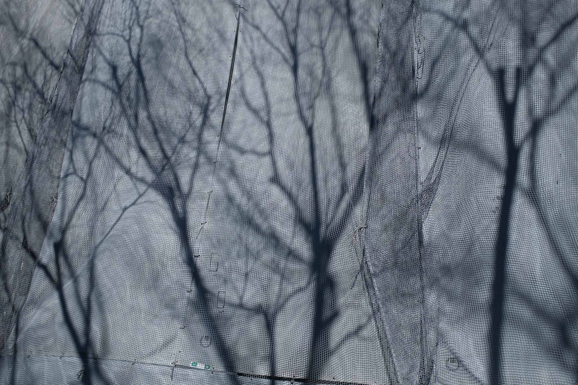 Tokytrees-0582.jpg