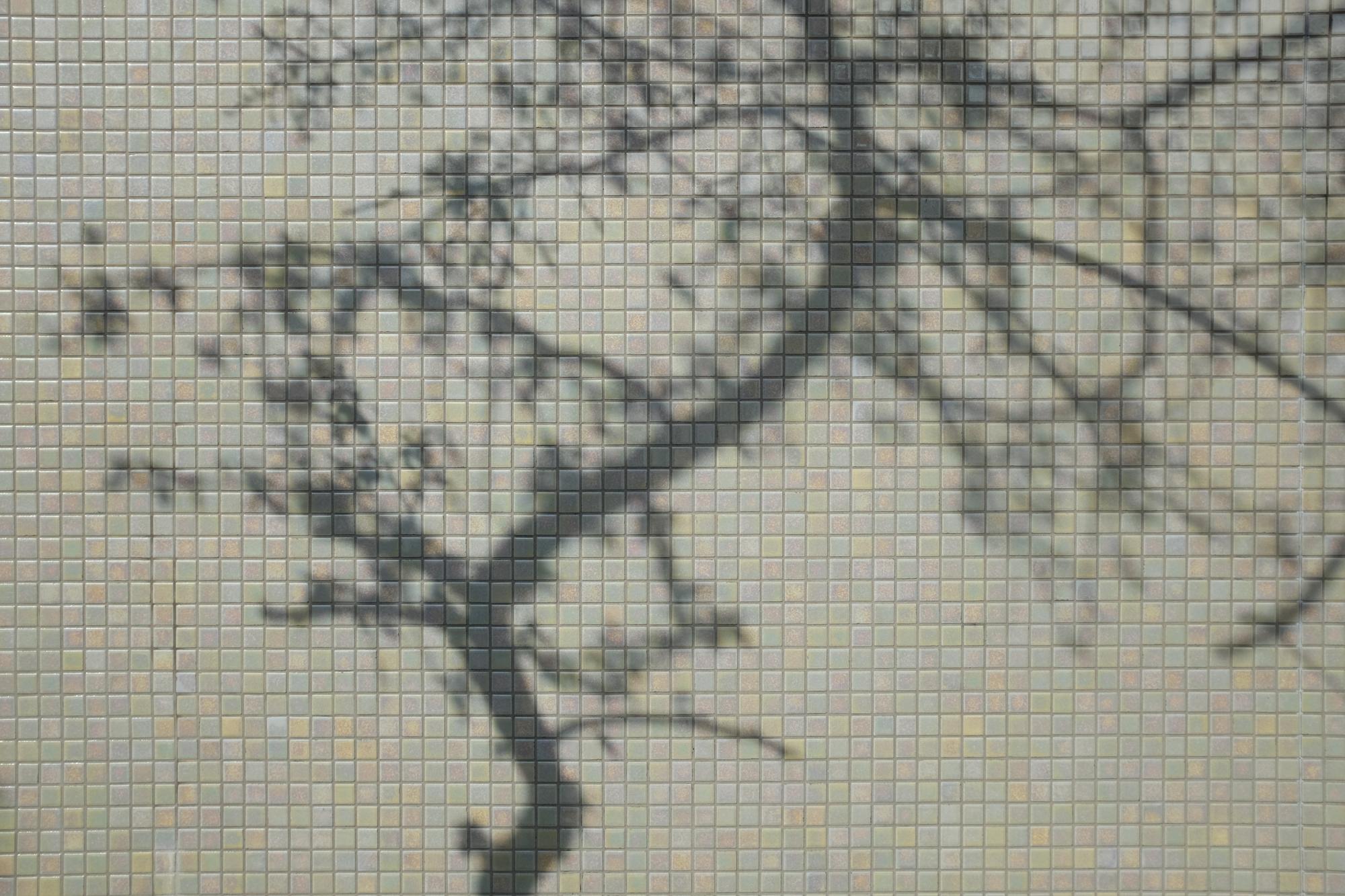 Tokytrees-1655.jpg
