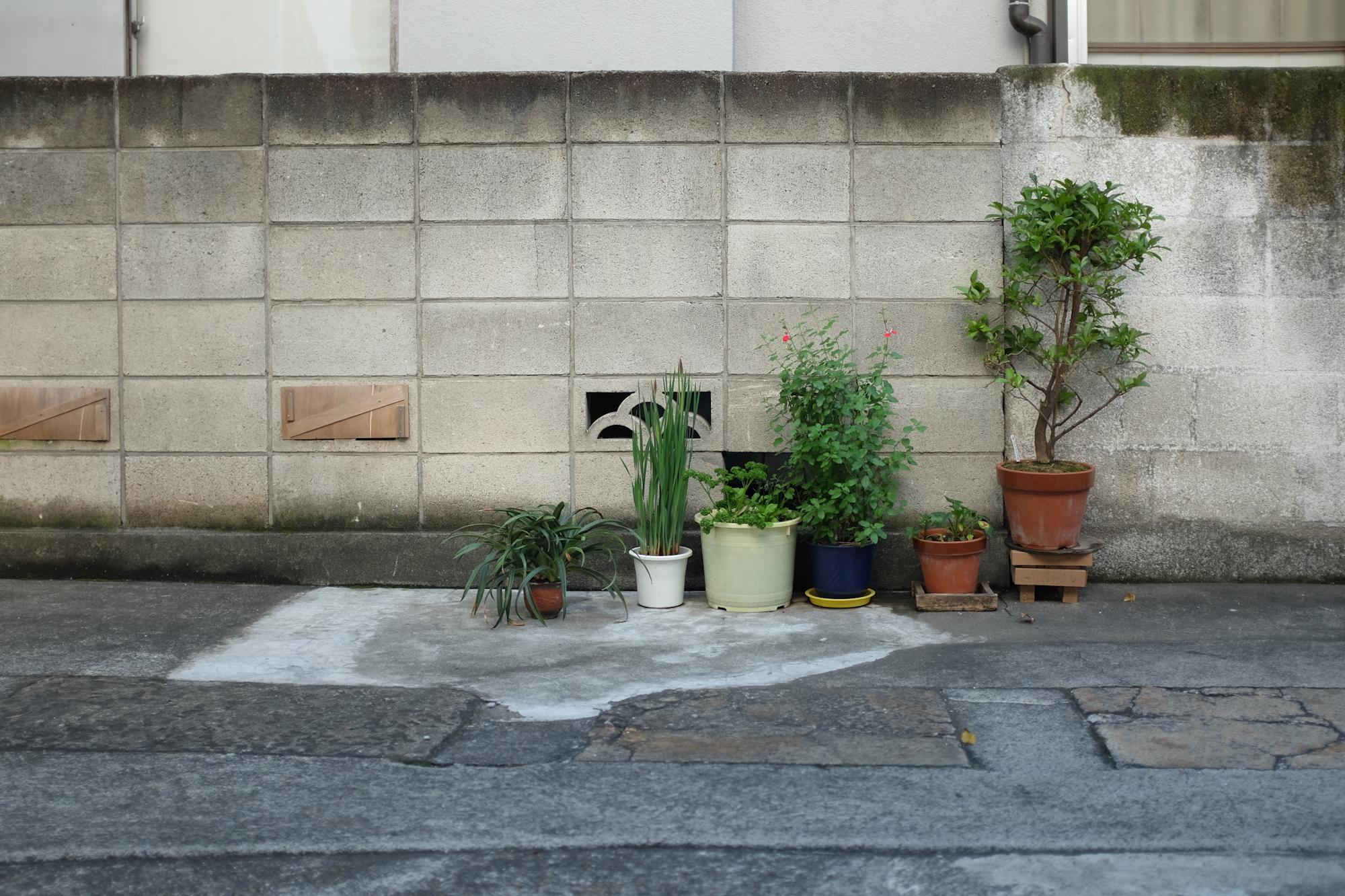 Tokyostreetgardens-3427.jpg