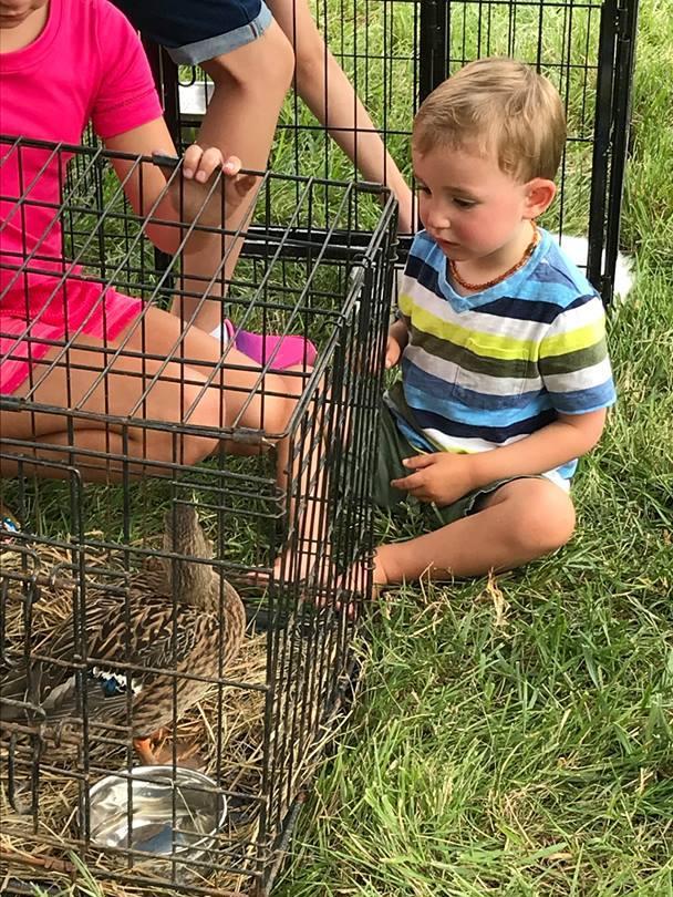2018-08-18 petting.jpg