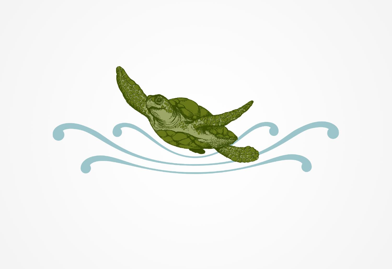 turtle-shirt-illustration.jpg