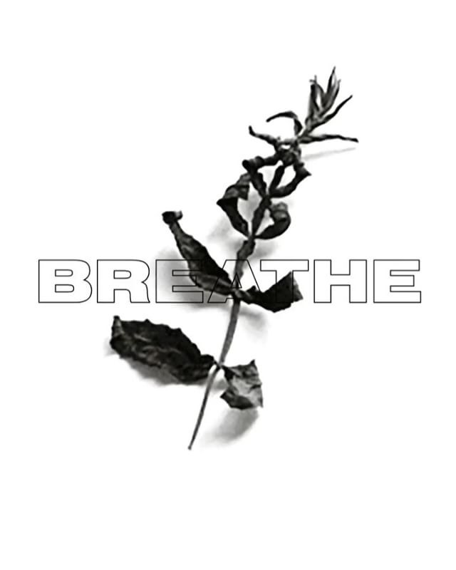 BREATHE 2 & a lost file 🌿🗿 #graphicdesign #graphic #design #digitalart #type #overlay #plant #life #death #breathe #sculpture #bird #birds #a #marchbank