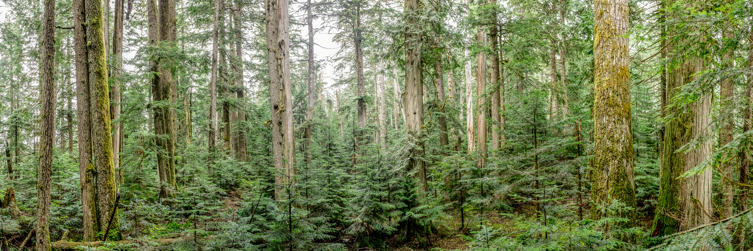 Alouette Old Growth
