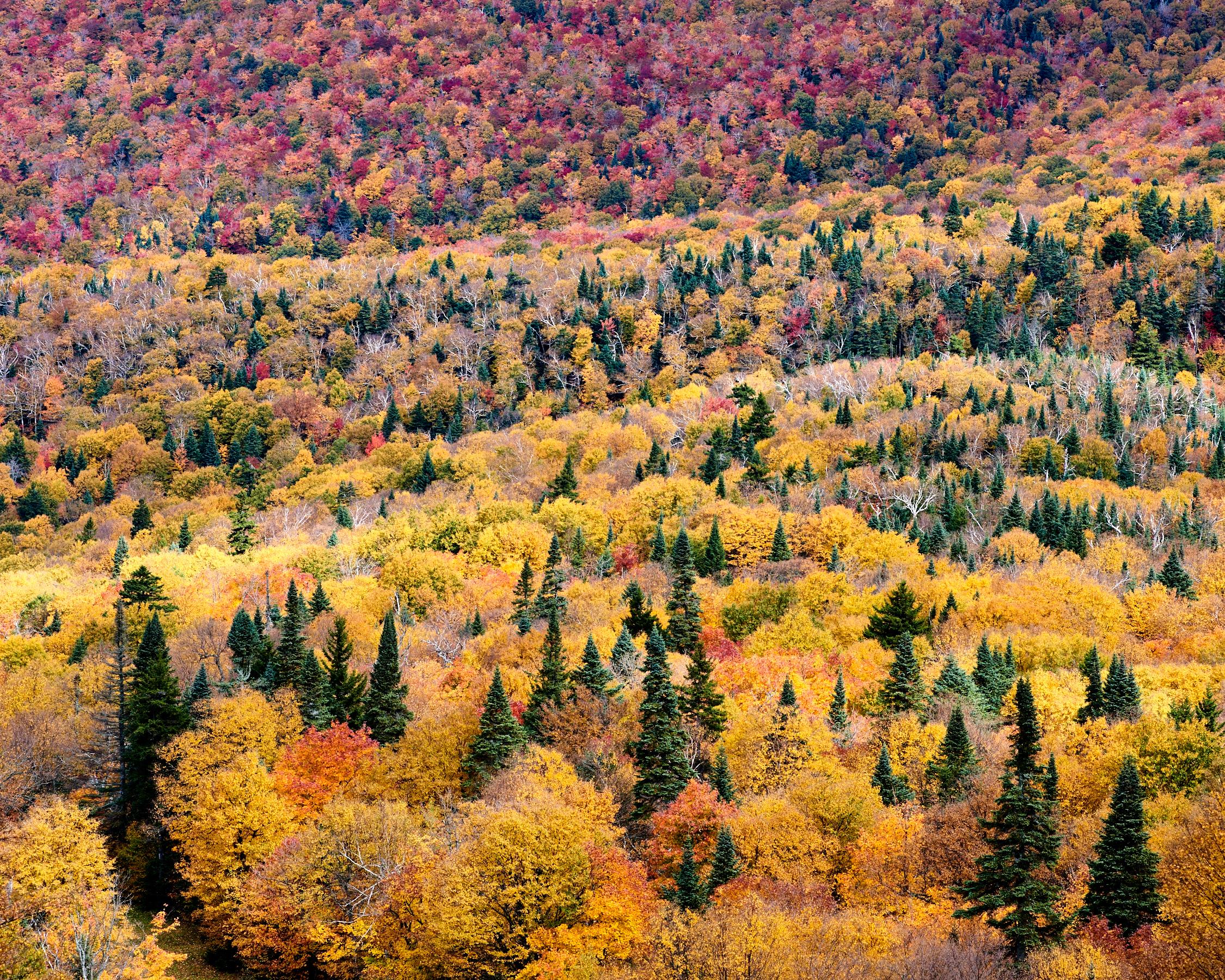 Mount Sutton Maples