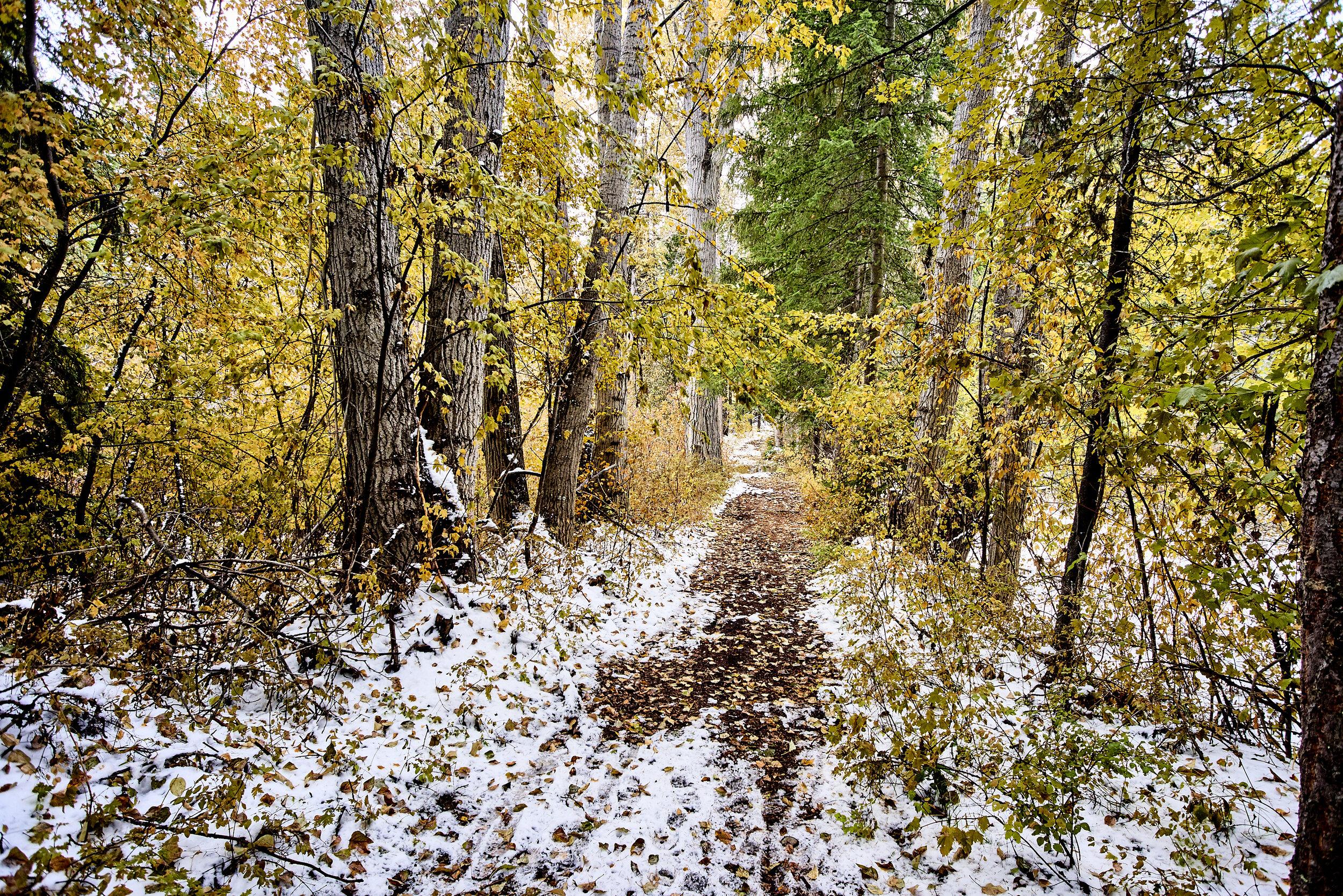 Cottonwood Path
