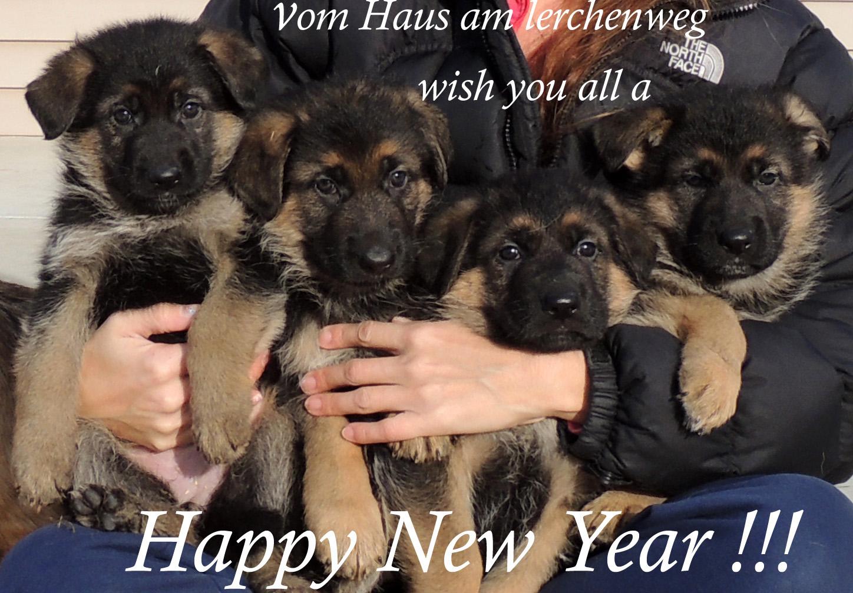 new year copy.jpg