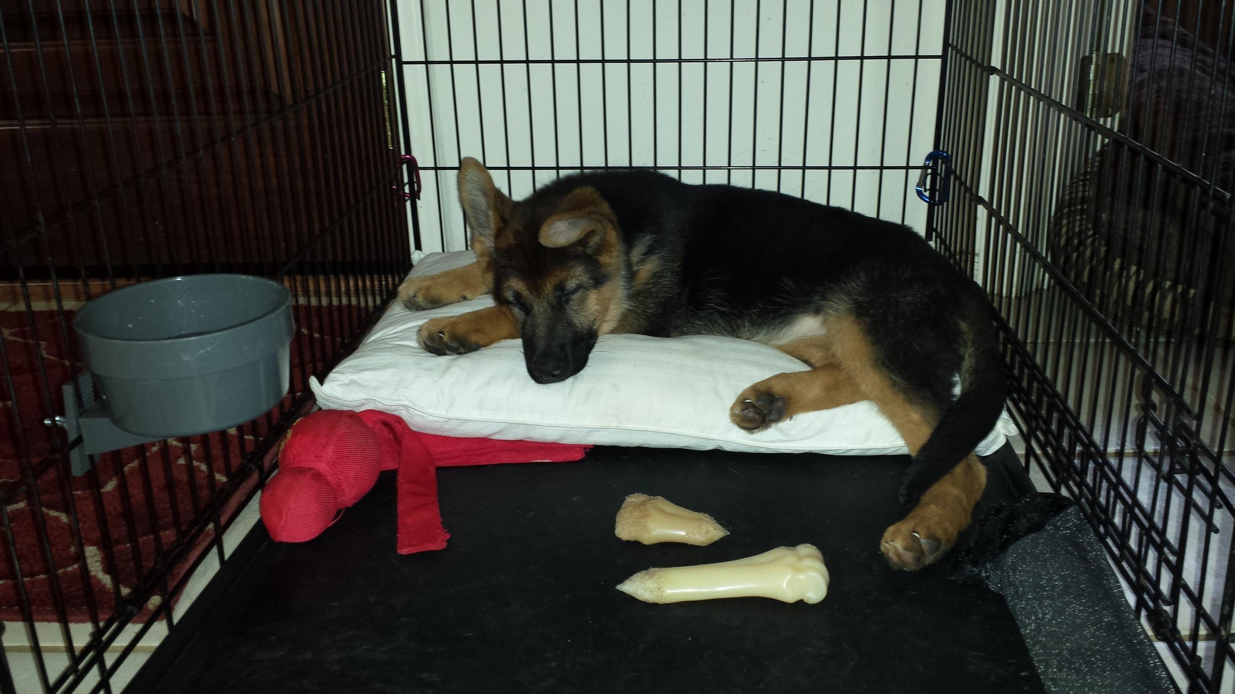 Roxy napping.jpg