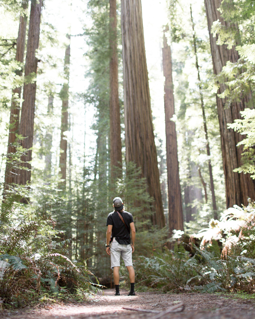olivia_ashton_photography_roadtrip_redwoods_california