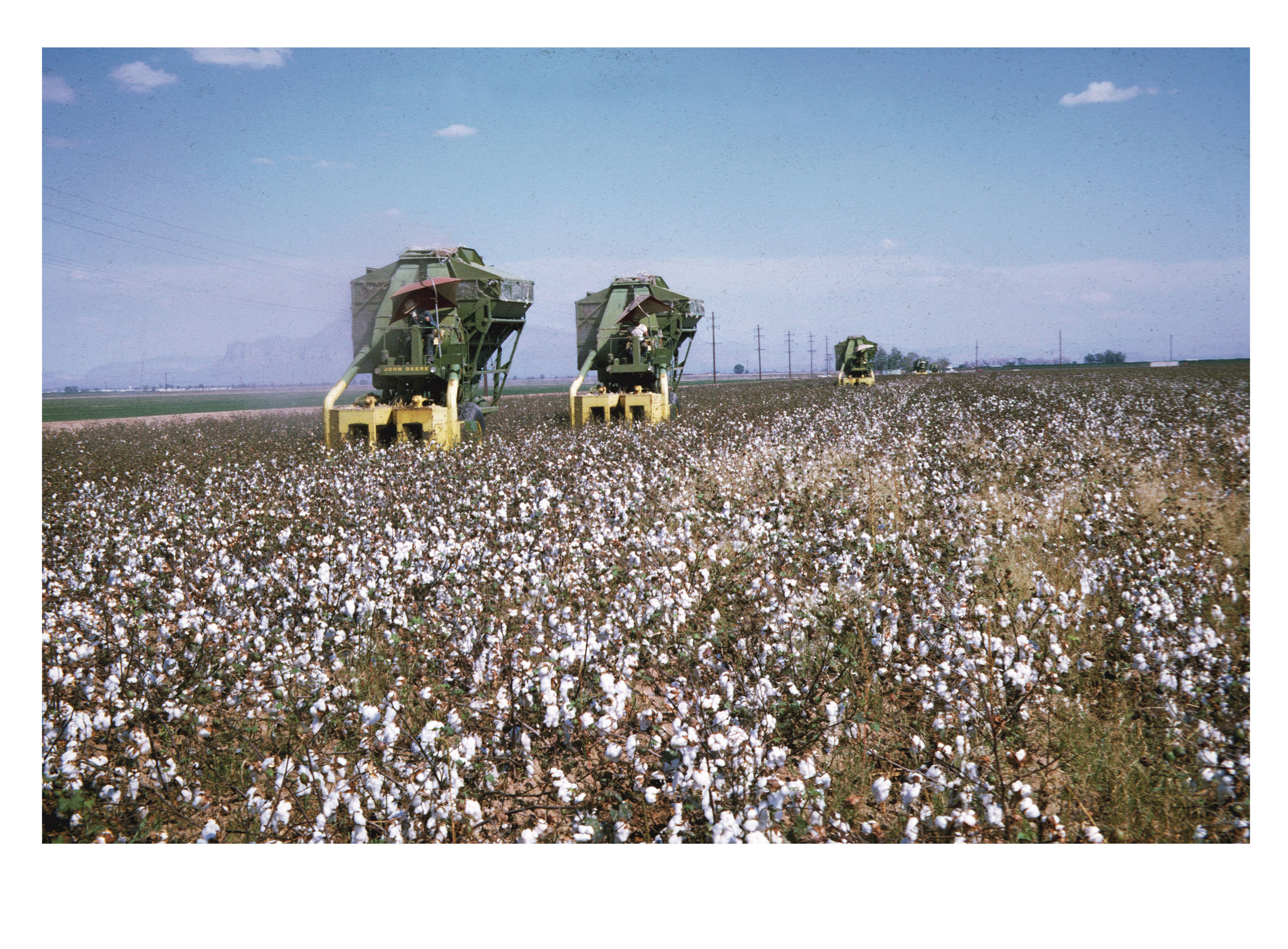 Cotton Pickers (with photograph by Marvin Morrison)   Pigmented Inkjet Print © 2013, Gina DeGideo