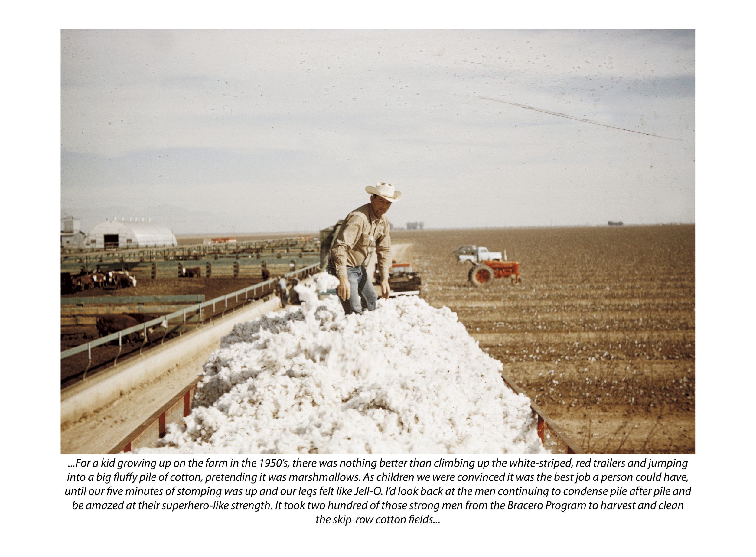 Cotton Stomper (with photograph by Marvin Morrison)   Pigmented Inkjet Print with Text © 2013, Gina DeGideo