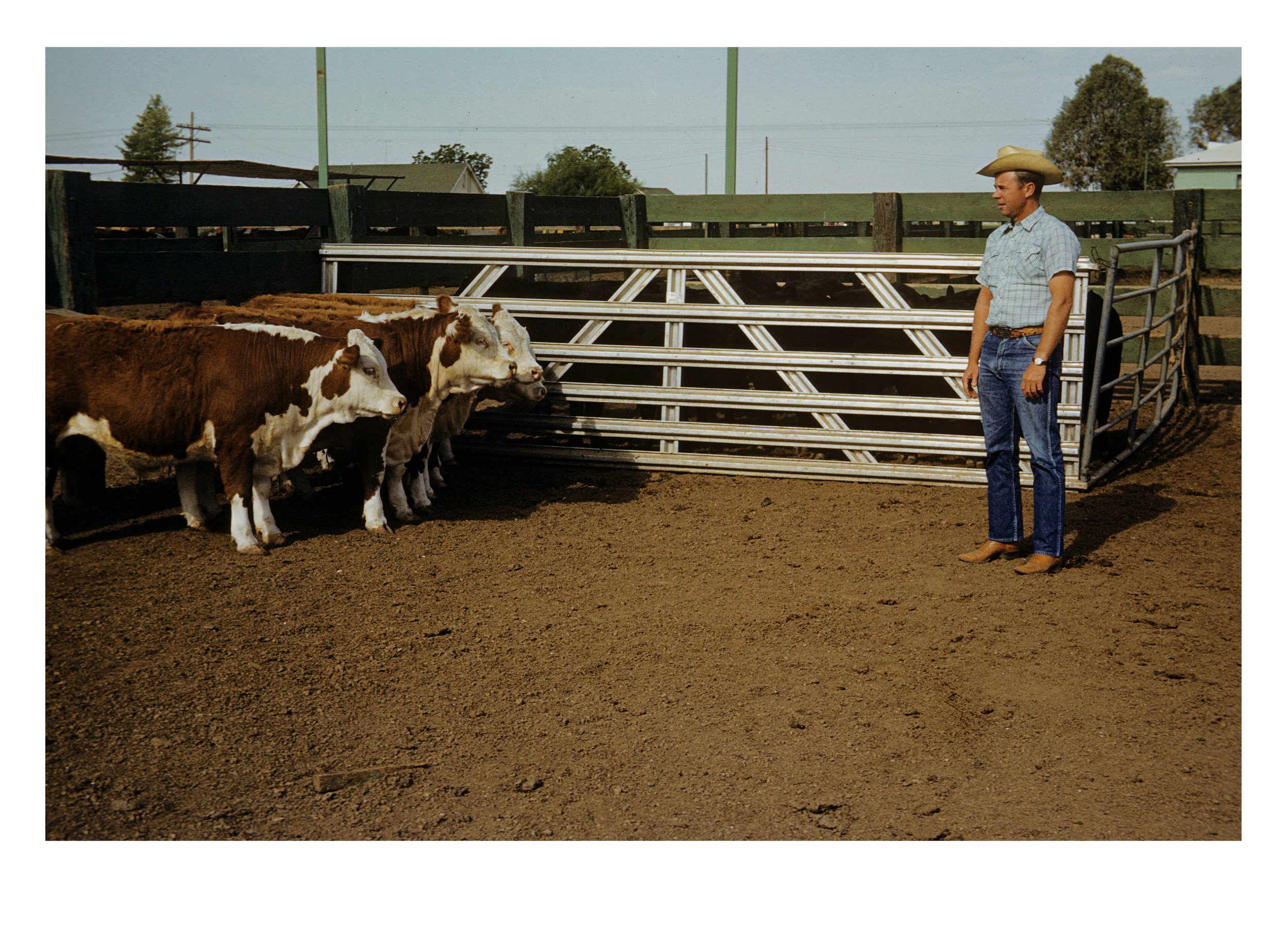 Kenneth and Cattle (with photograph by Marvin Morrison)   Pigmented Inkjet Print © 2013, Gina DeGideo